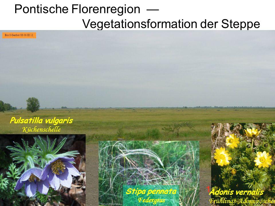 Pontische Florenregion — Vegetationsformation der Steppe