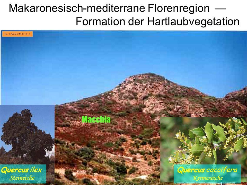 Makaronesisch-mediterrane Florenregion —