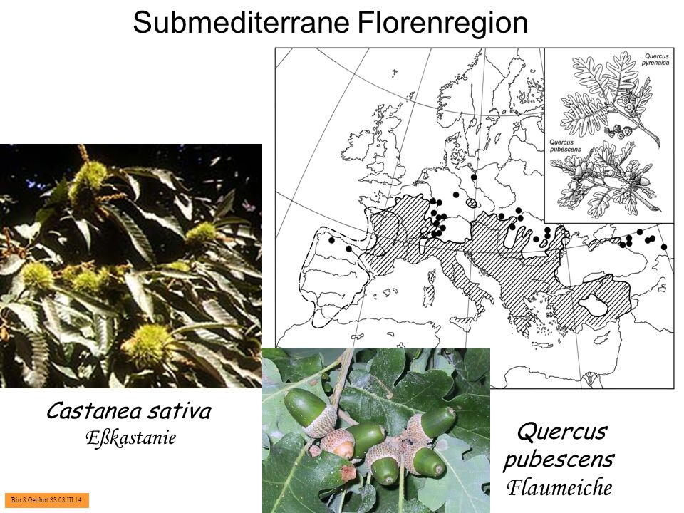 Submediterrane Florenregion