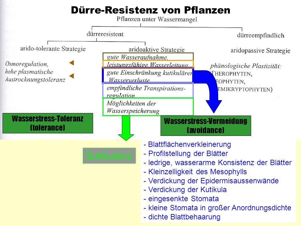 Dürre-Resistenz von Pflanzen