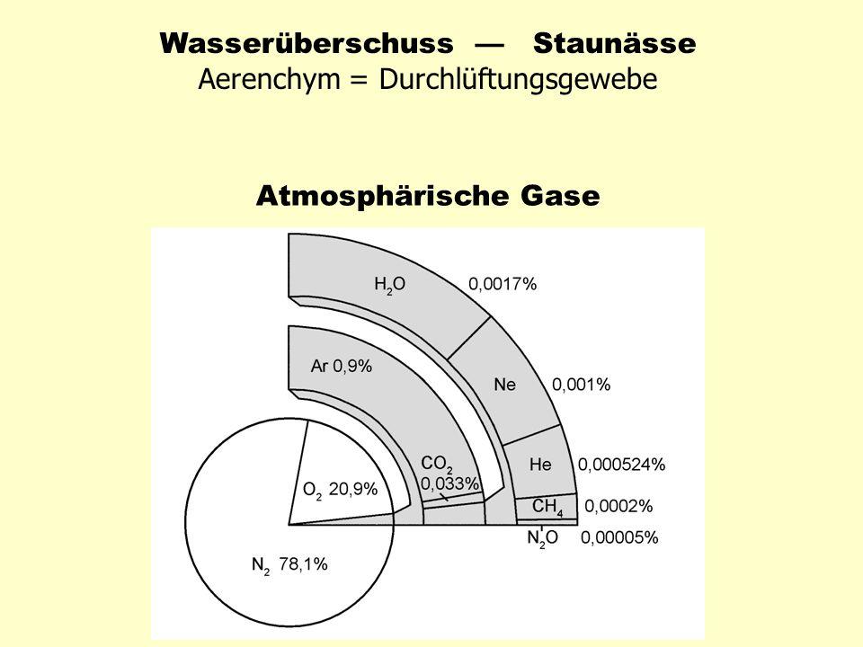 Wasserüberschuss — Staunässe Aerenchym = Durchlüftungsgewebe