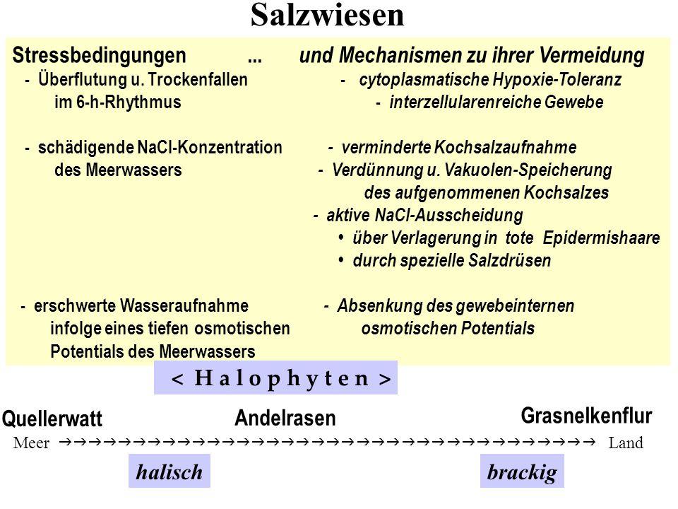 Salzwiesen Stressbedingungen ... und Mechanismen zu ihrer Vermeidung
