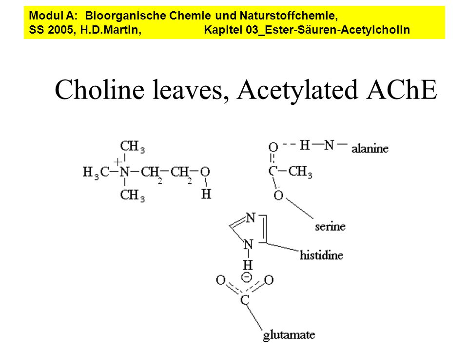 Choline leaves, Acetylated AChE