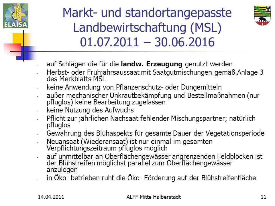 ALFF Mitte Halberstadt