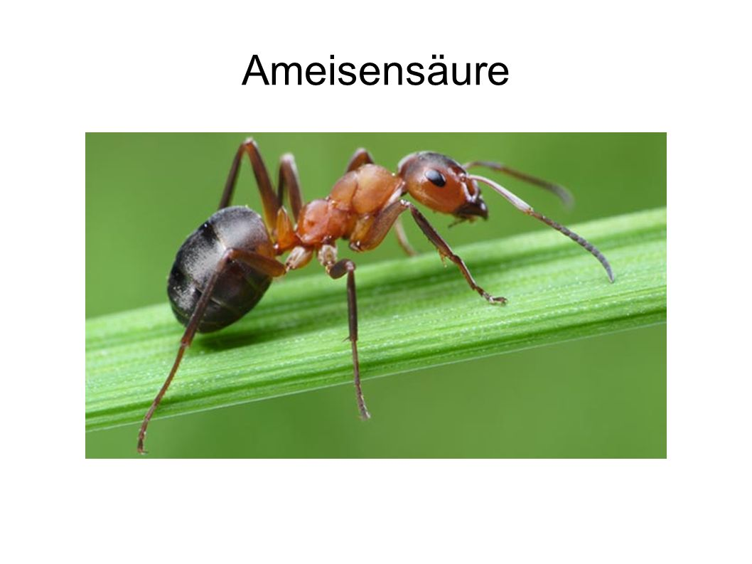Ameisensäure