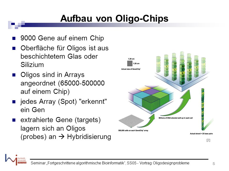Aufbau von Oligo-Chips