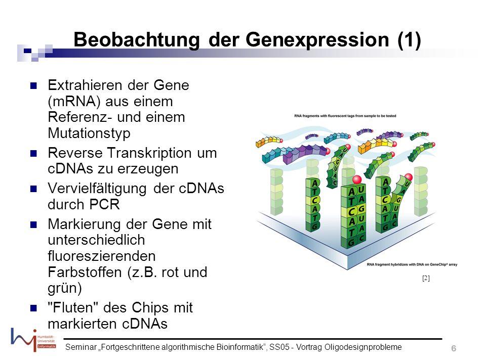Beobachtung der Genexpression (1)