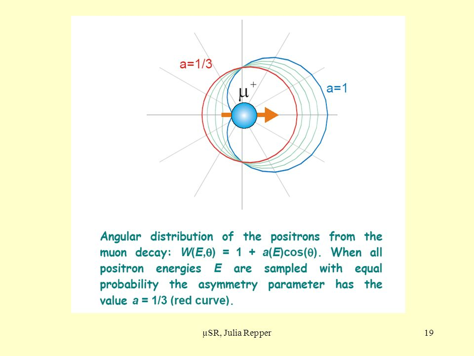 Anisotropie e+ µSR, Julia Repper