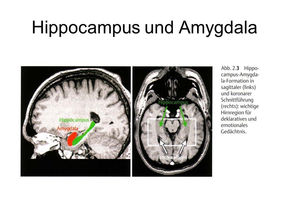 Entstehung, Symptomatik, Behandlung - ppt video online ...