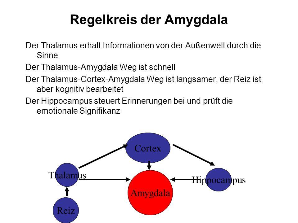 Regelkreis der Amygdala