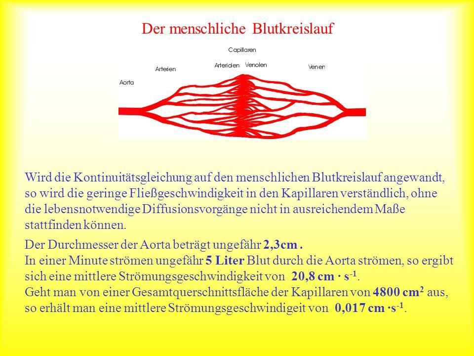 Der menschliche Blutkreislauf