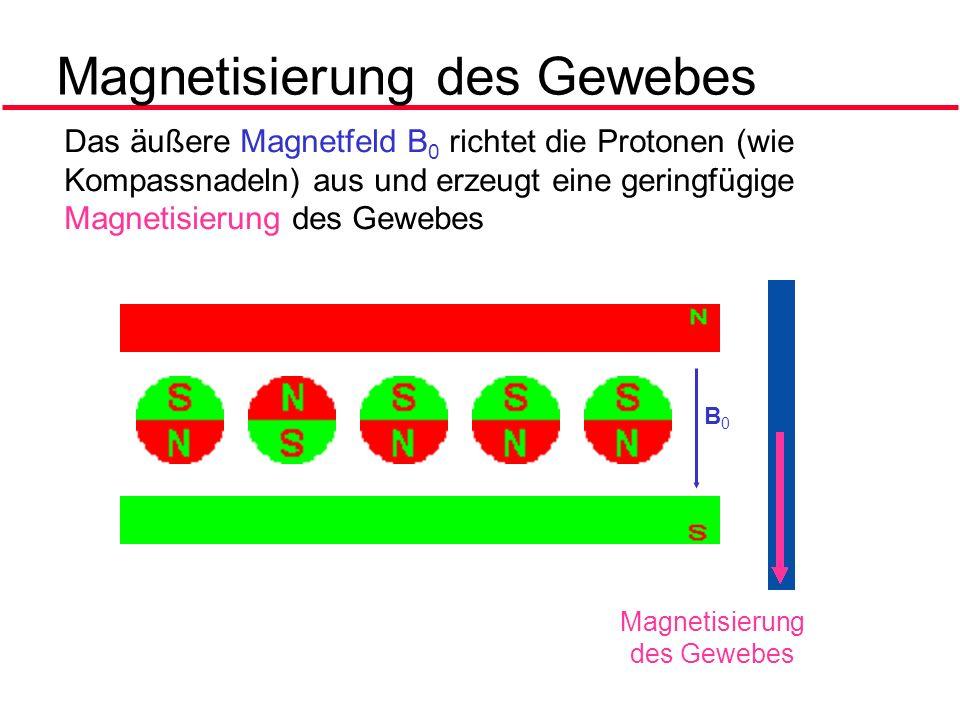 Magnetisierung des Gewebes