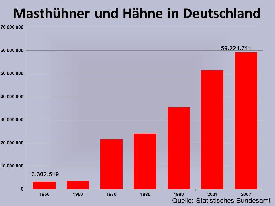 Masthühner und Hähne in Deutschland