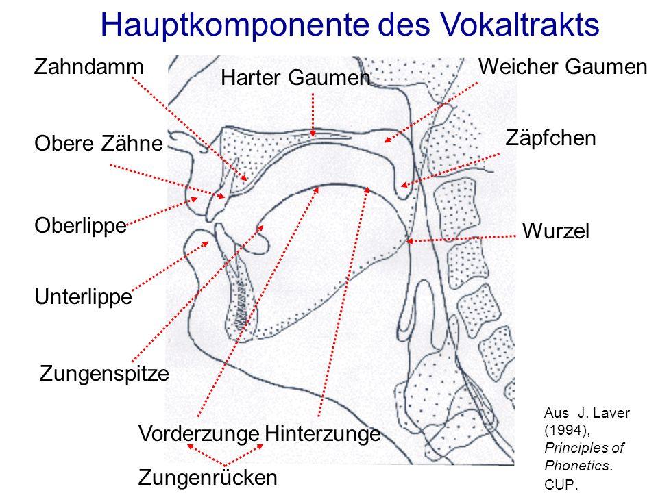 Hauptkomponente des Vokaltrakts