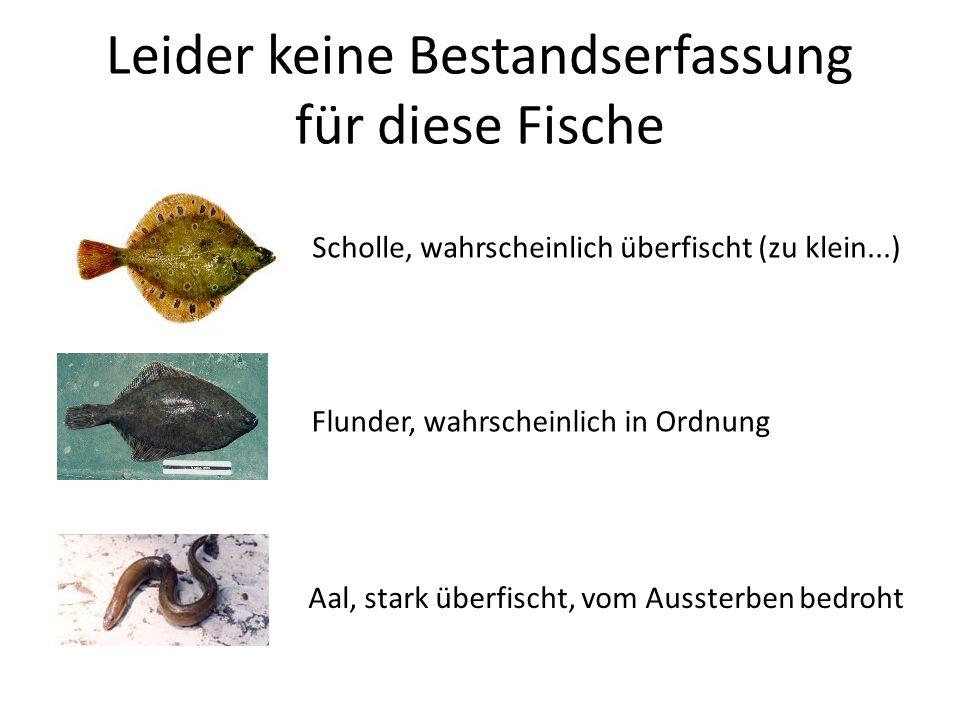 Leider keine Bestandserfassung für diese Fische