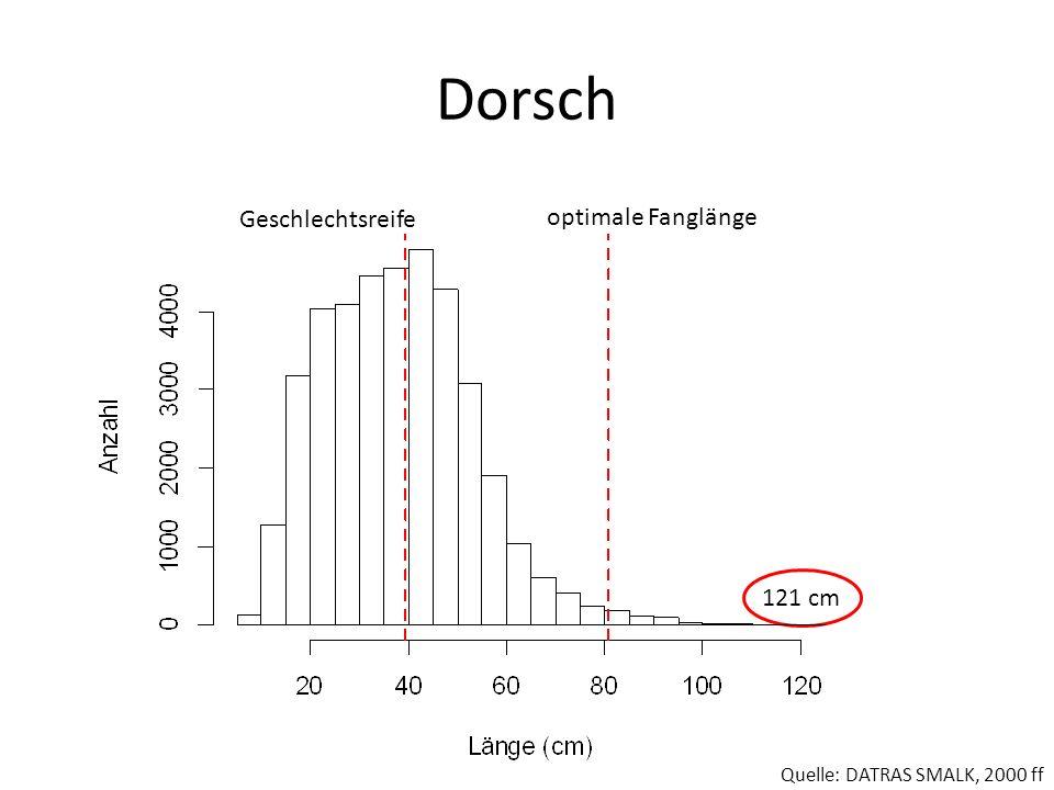 Dorsch Geschlechtsreife optimale Fanglänge 121 cm