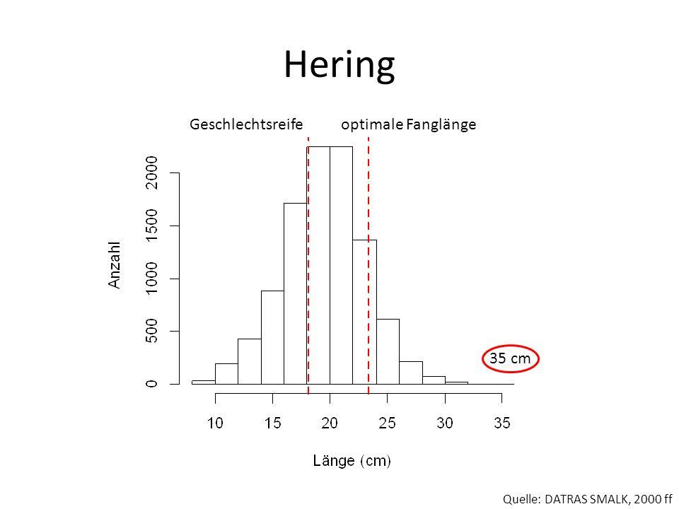 Hering Geschlechtsreife optimale Fanglänge 35 cm