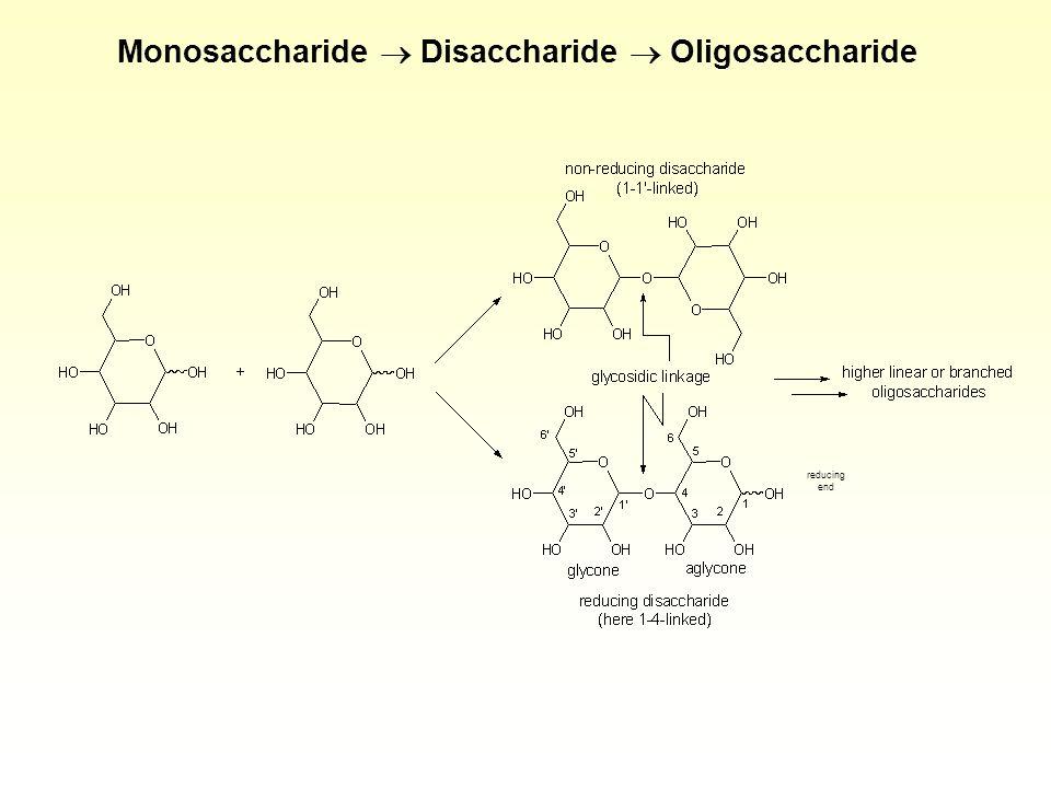 Monosaccharide  Disaccharide  Oligosaccharide