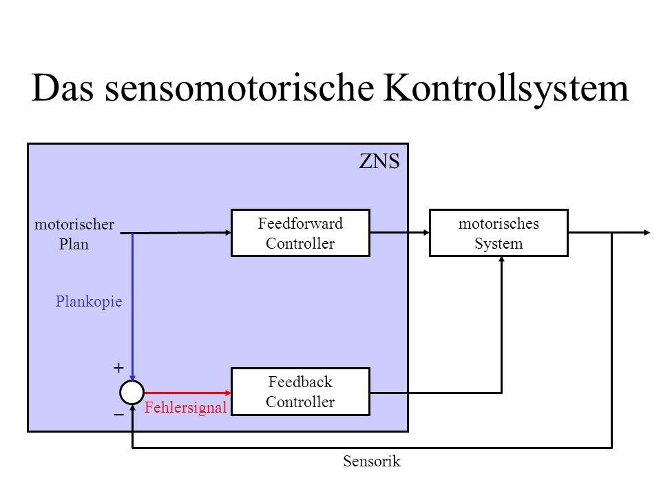 Das sensomotorische Kontrollsystem