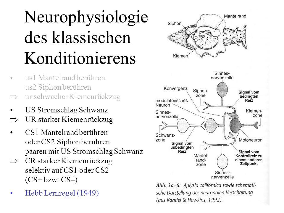 Neurophysiologie des klassischen Konditionierens