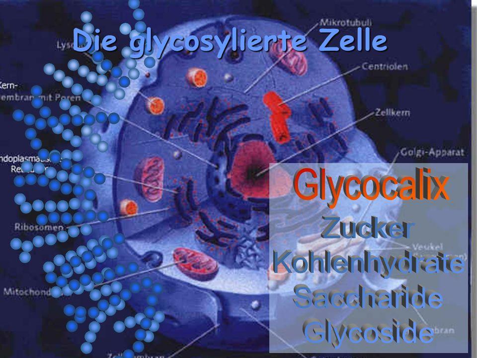 Glycocalix Die glycosylierte Zelle Zucker Kohlenhydrate Saccharide