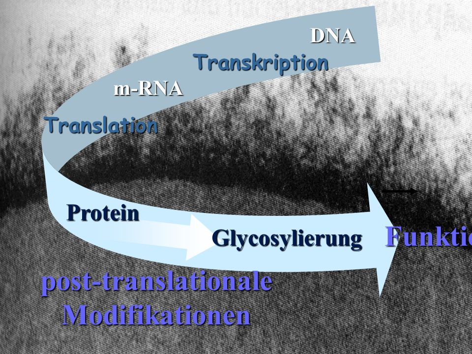 post-translationale Modifikationen