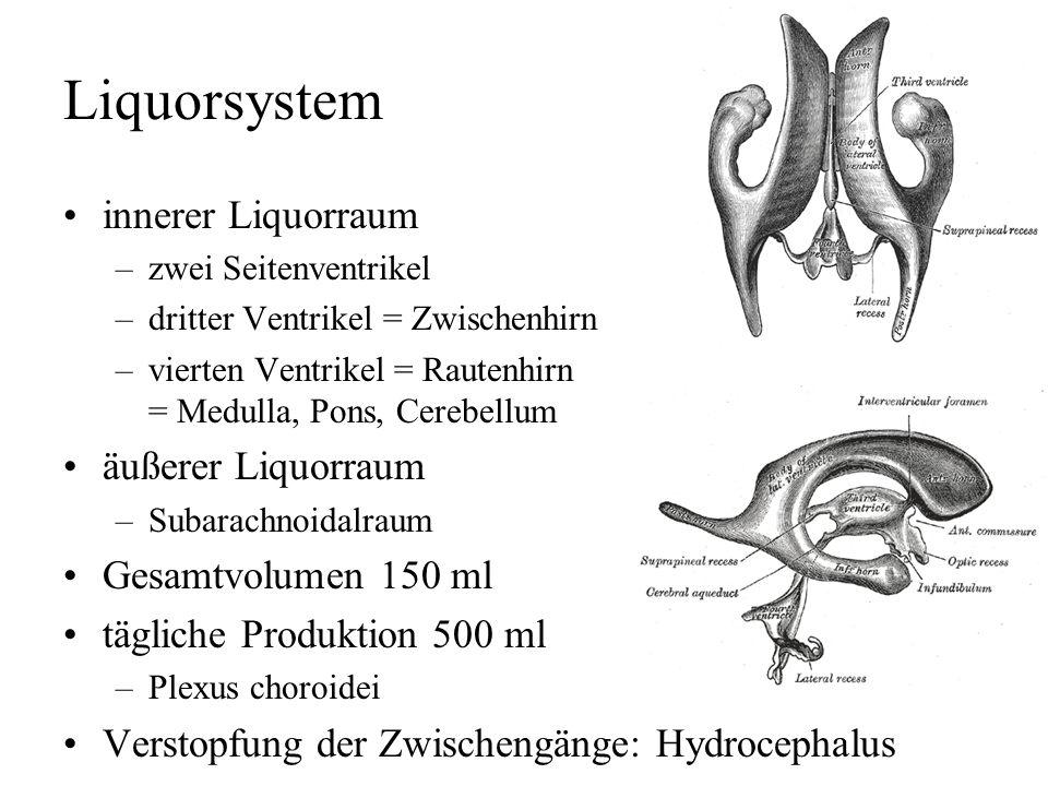 Liquorsystem innerer Liquorraum äußerer Liquorraum