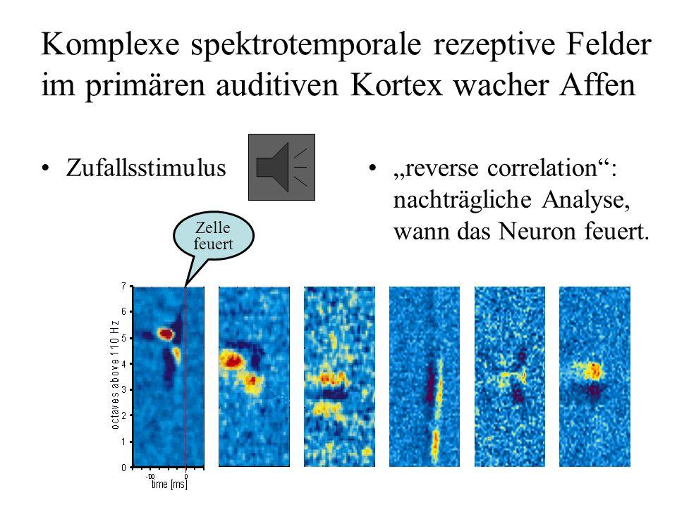 Komplexe spektrotemporale rezeptive Felder im primären auditiven Kortex wacher Affen