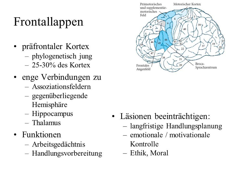 Frontallappen präfrontaler Kortex enge Verbindungen zu Funktionen