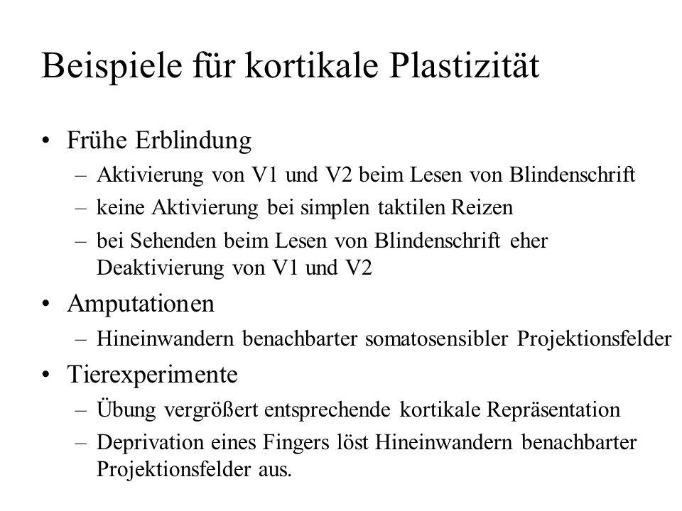 Beispiele für kortikale Plastizität
