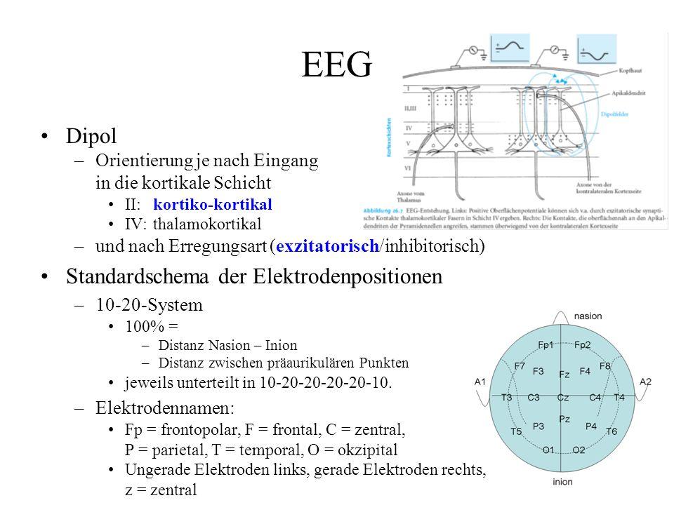 EEG Dipol Standardschema der Elektrodenpositionen