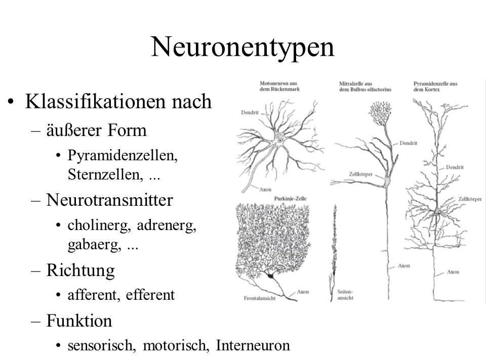 Neuronentypen Klassifikationen nach äußerer Form Neurotransmitter