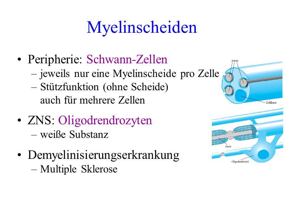 Myelinscheiden Peripherie: Schwann-Zellen ZNS: Oligodrendrozyten