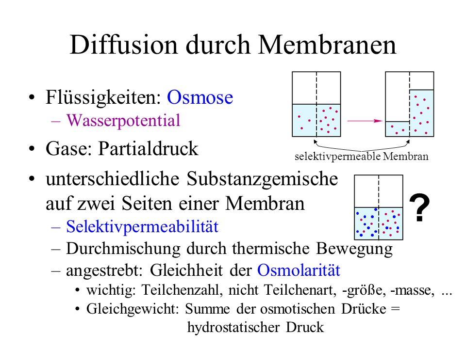 Diffusion durch Membranen