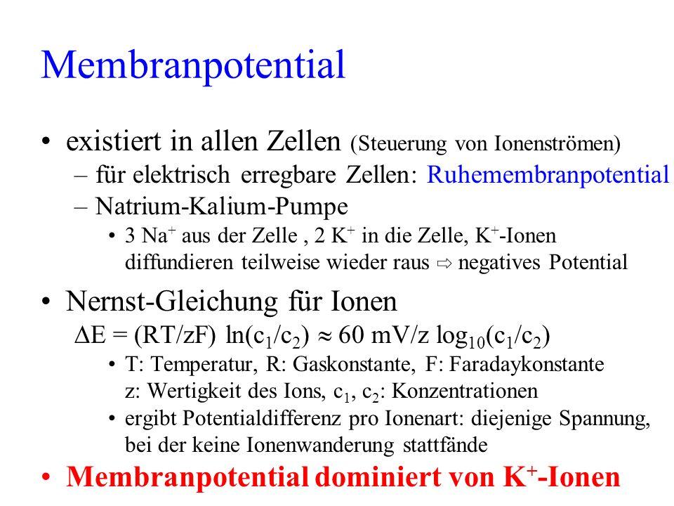 Membranpotential existiert in allen Zellen (Steuerung von Ionenströmen) für elektrisch erregbare Zellen: Ruhemembranpotential.