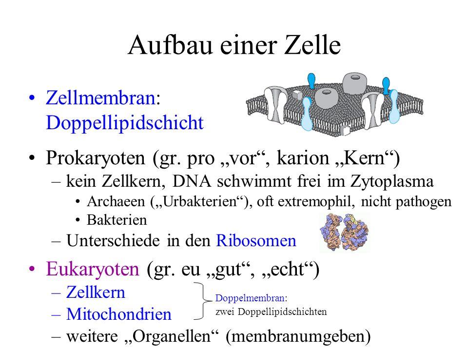 Aufbau einer Zelle Zellmembran: Doppellipidschicht