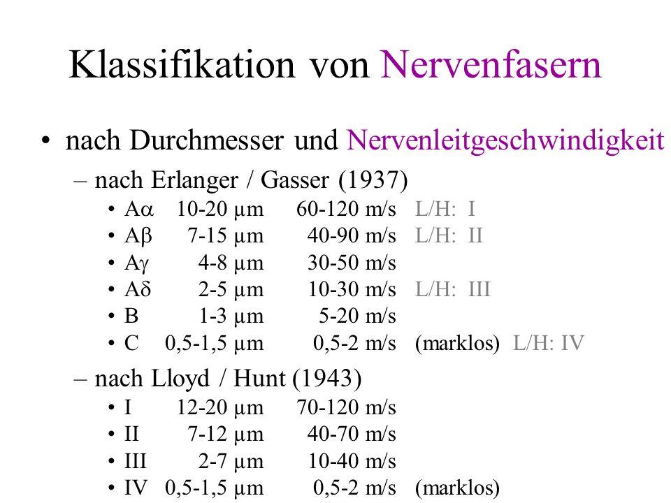 Klassifikation von Nervenfasern