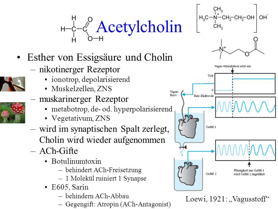 Acetylcholin Esther von Essigsäure und Cholin nikotinerger Rezeptor