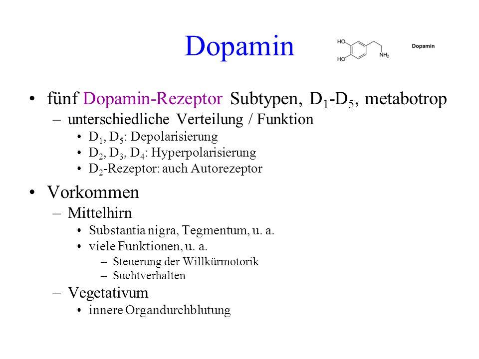 Dopamin fünf Dopamin-Rezeptor Subtypen, D1-D5, metabotrop Vorkommen