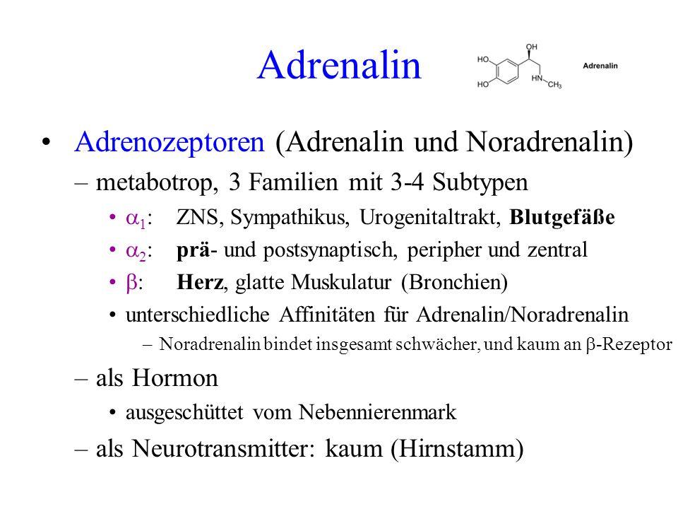 Adrenalin Adrenozeptoren (Adrenalin und Noradrenalin)