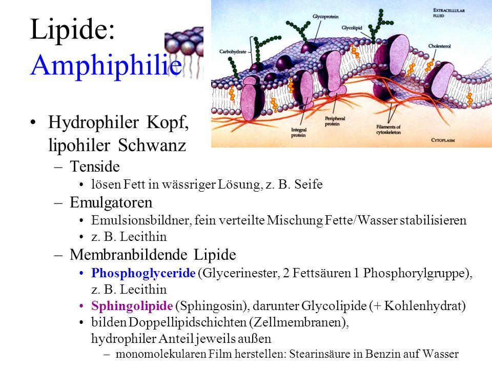 Lipide: Amphiphilie Hydrophiler Kopf, lipohiler Schwanz Tenside