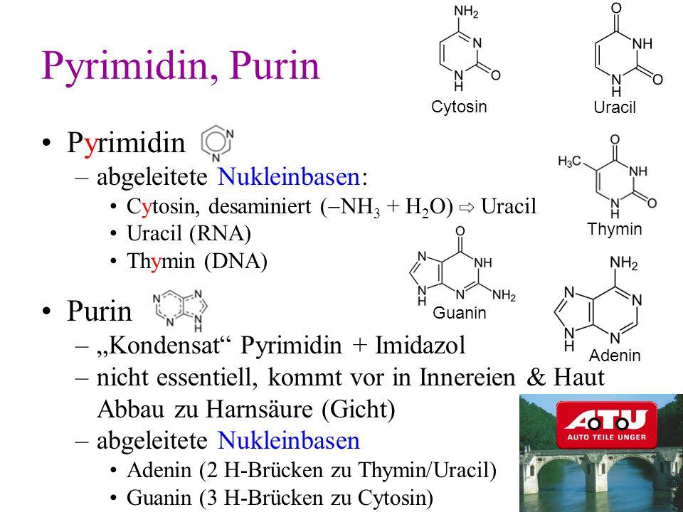 Pyrimidin, Purin Pyrimidin Purin abgeleitete Nukleinbasen:
