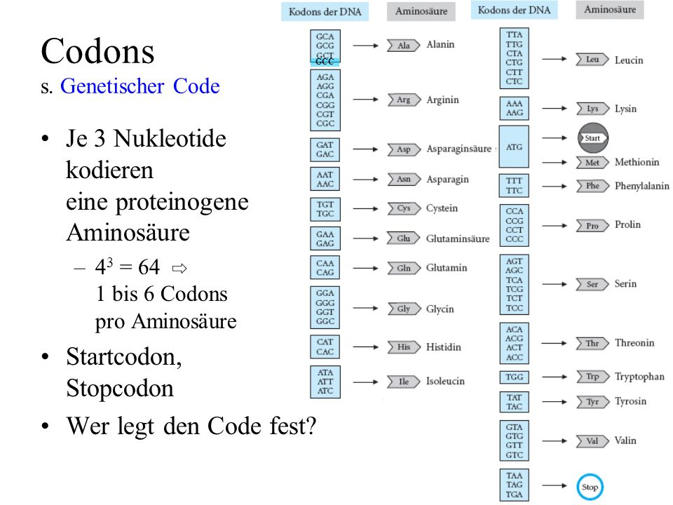 Codons s. Genetischer Code