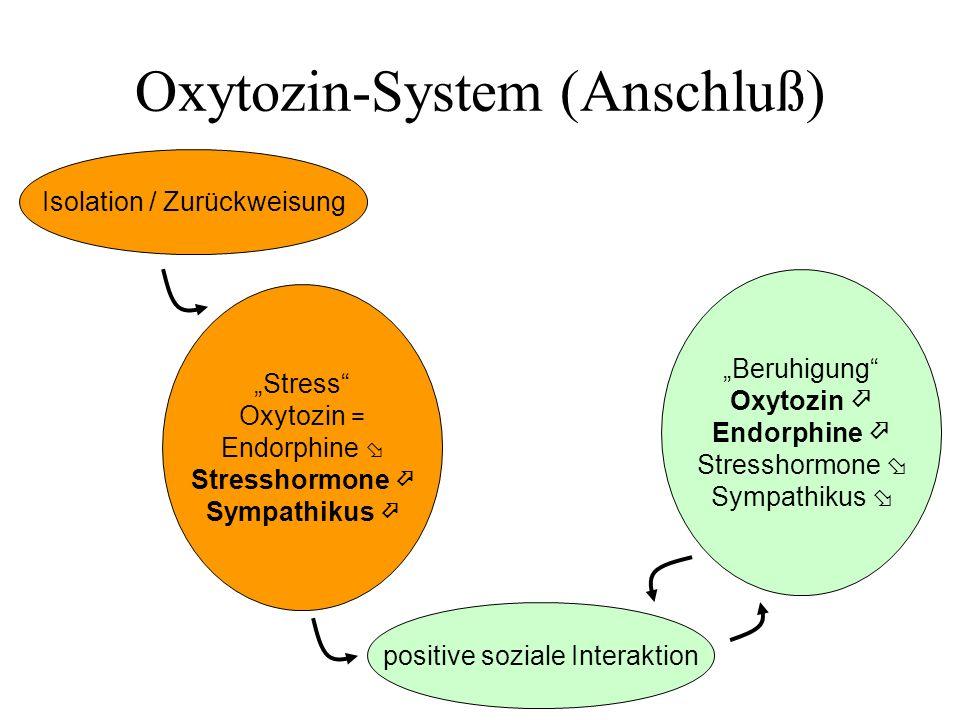 Oxytozin-System (Anschluß)