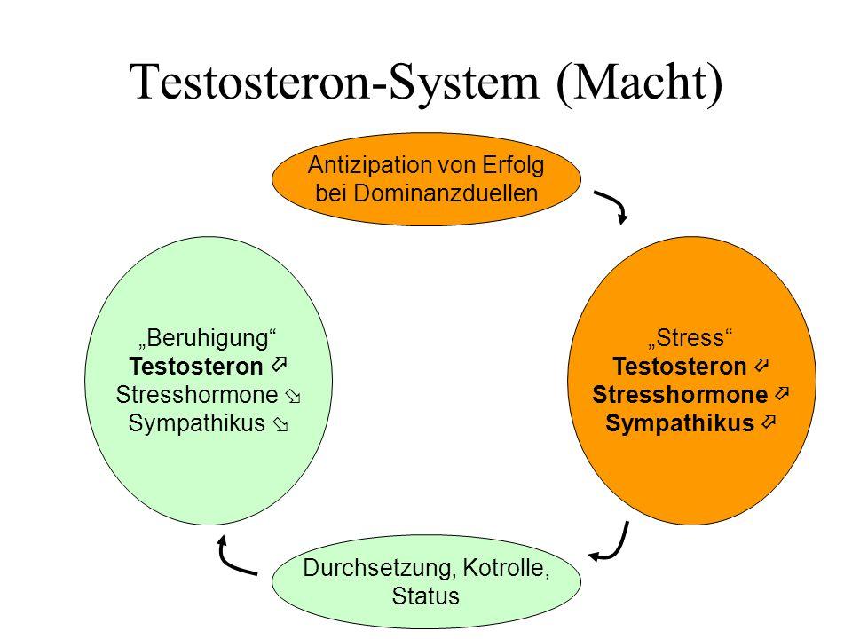 Testosteron-System (Macht)