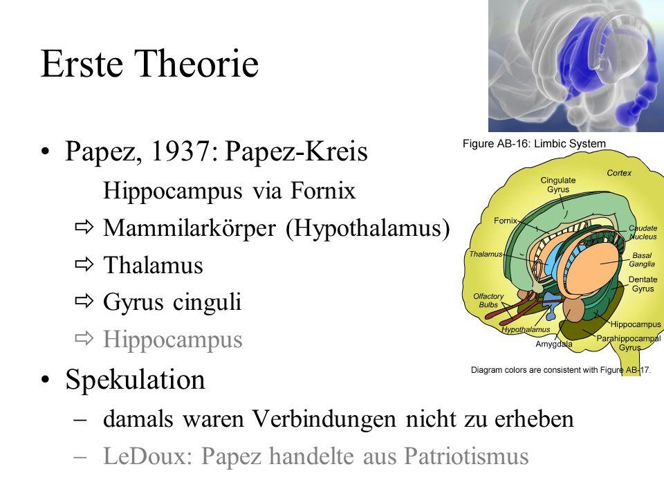 Erste Theorie Papez, 1937: Papez-Kreis Spekulation