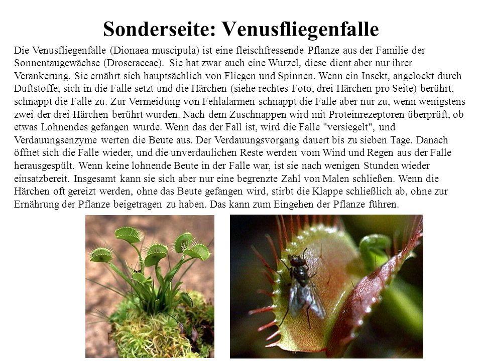 Sonderseite: Venusfliegenfalle