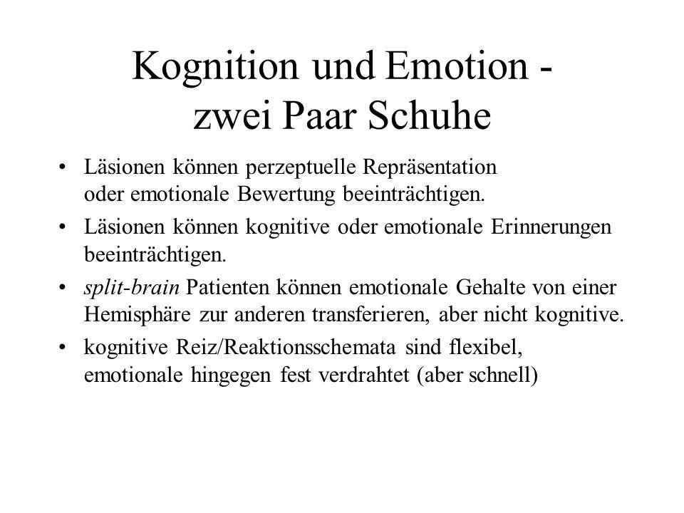 Kognition und Emotion - zwei Paar Schuhe