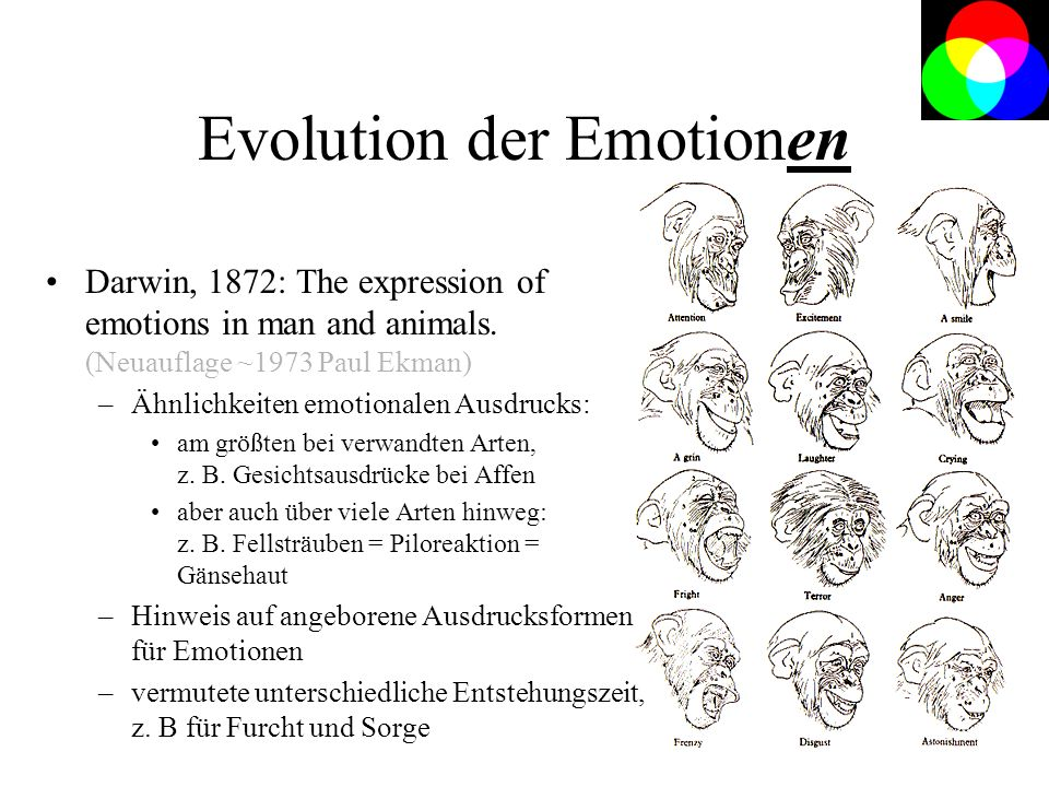 Evolution der Emotionen