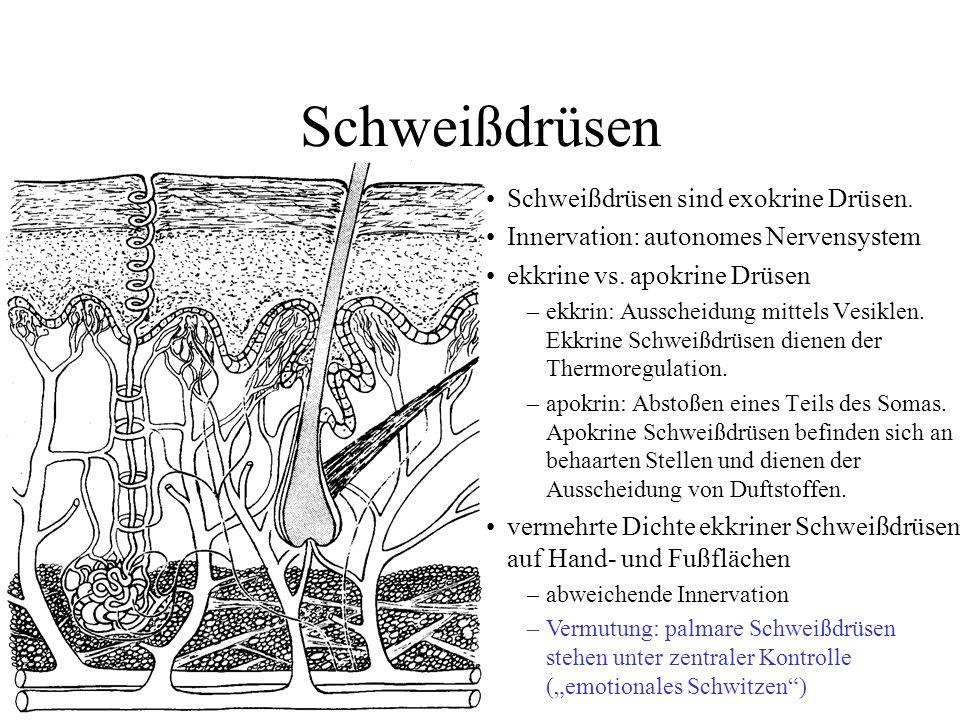 Tolle Ekkrinen Schweißdrüsen Zeitgenössisch - Menschliche Anatomie ...